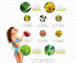 ミルズティー 効果・効能 10種類のハーブ