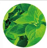スリムサポート酵素α+ 効果 フォルスコリ