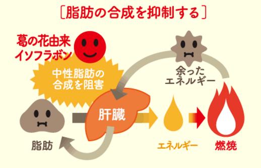 シボヘール 効果 脂肪合成抑制