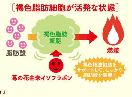 シボヘール 効果 脂肪燃焼促進